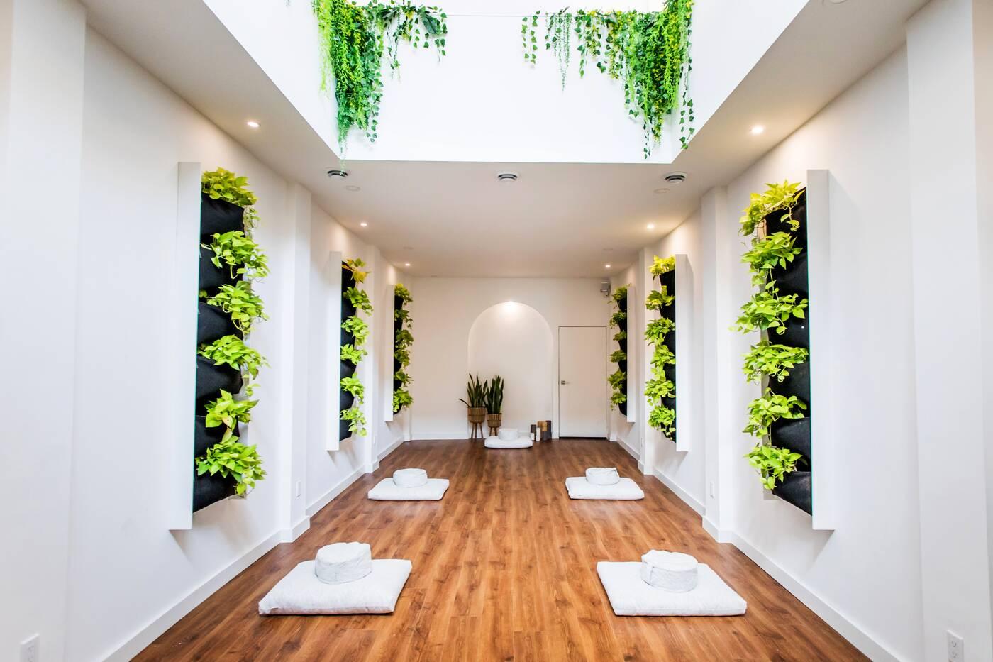 Plant Lyfe Toronto