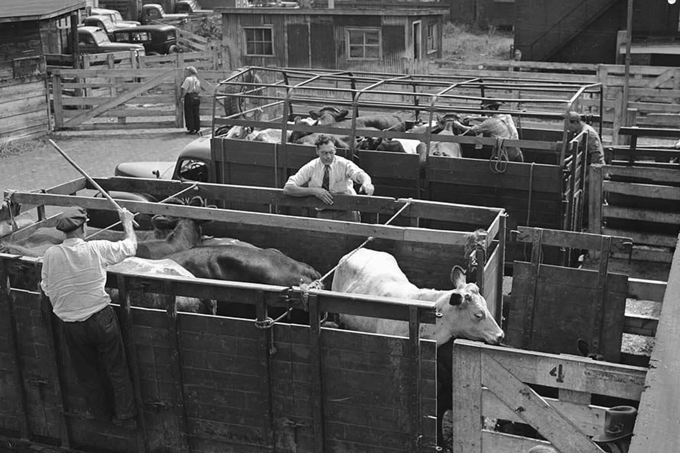 stockyards toronto