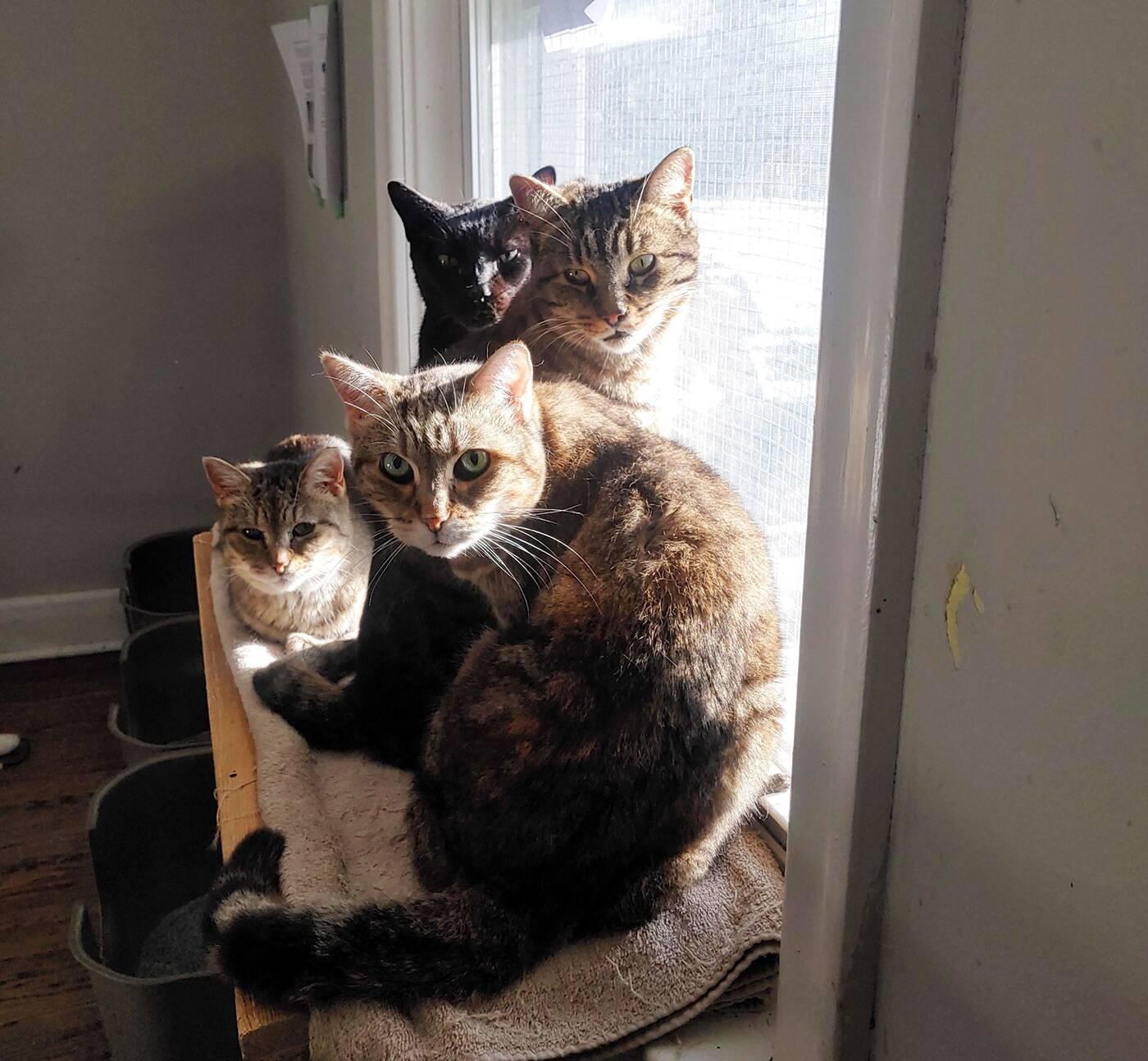 north toronto cat rescue