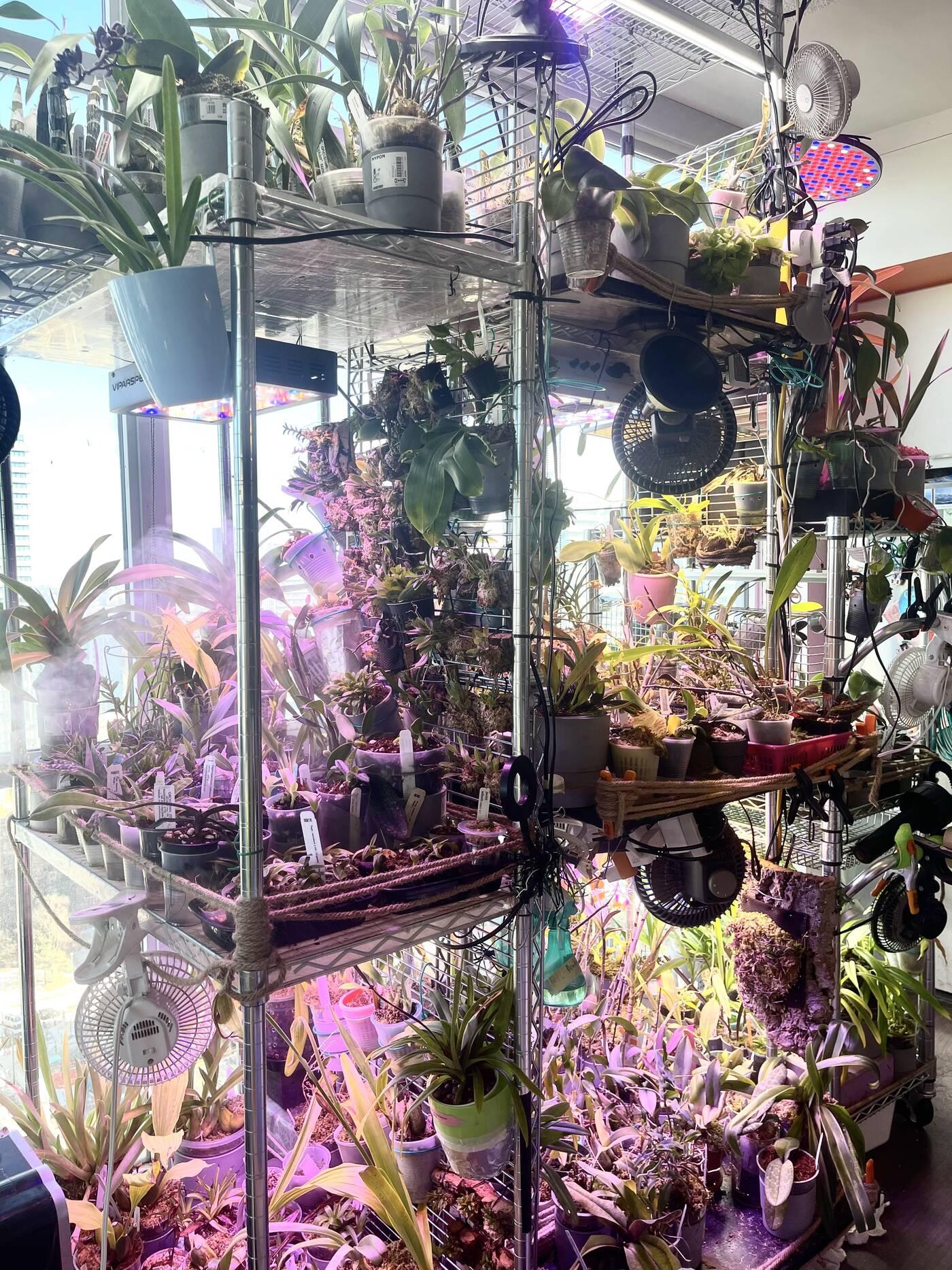 orchids toronto