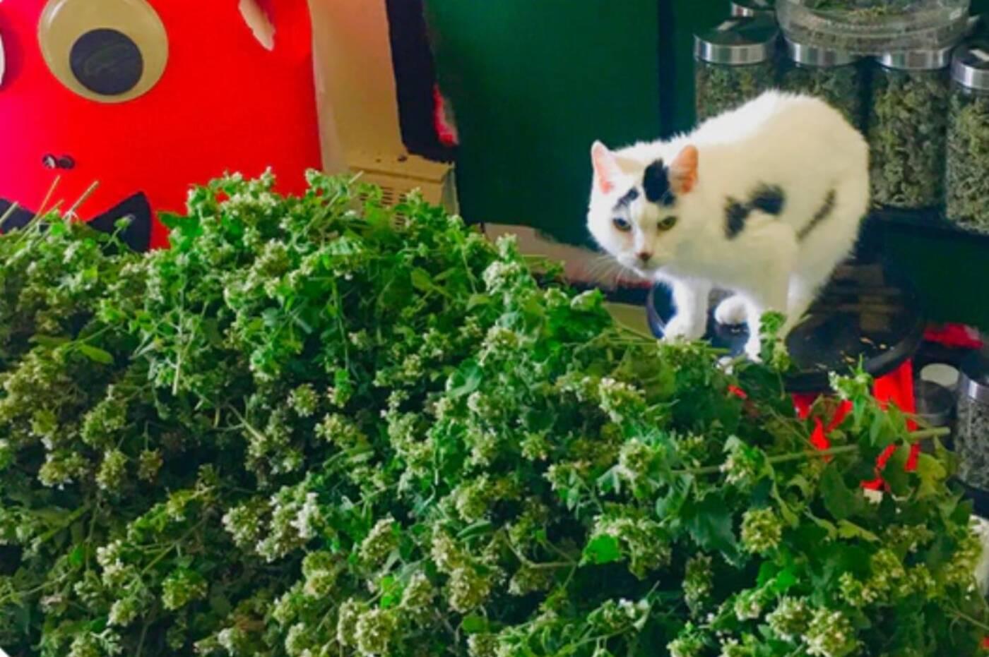 catnip dispensary toronto