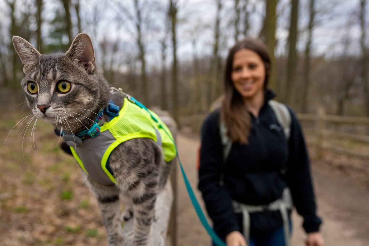 toronto cat