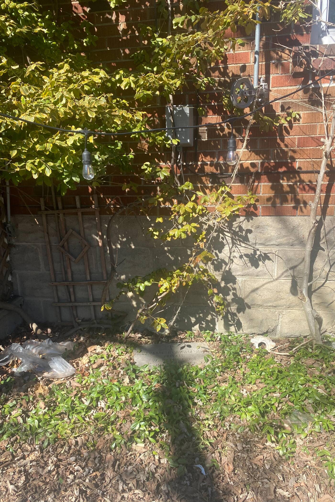 gravestone etobicoke backyard