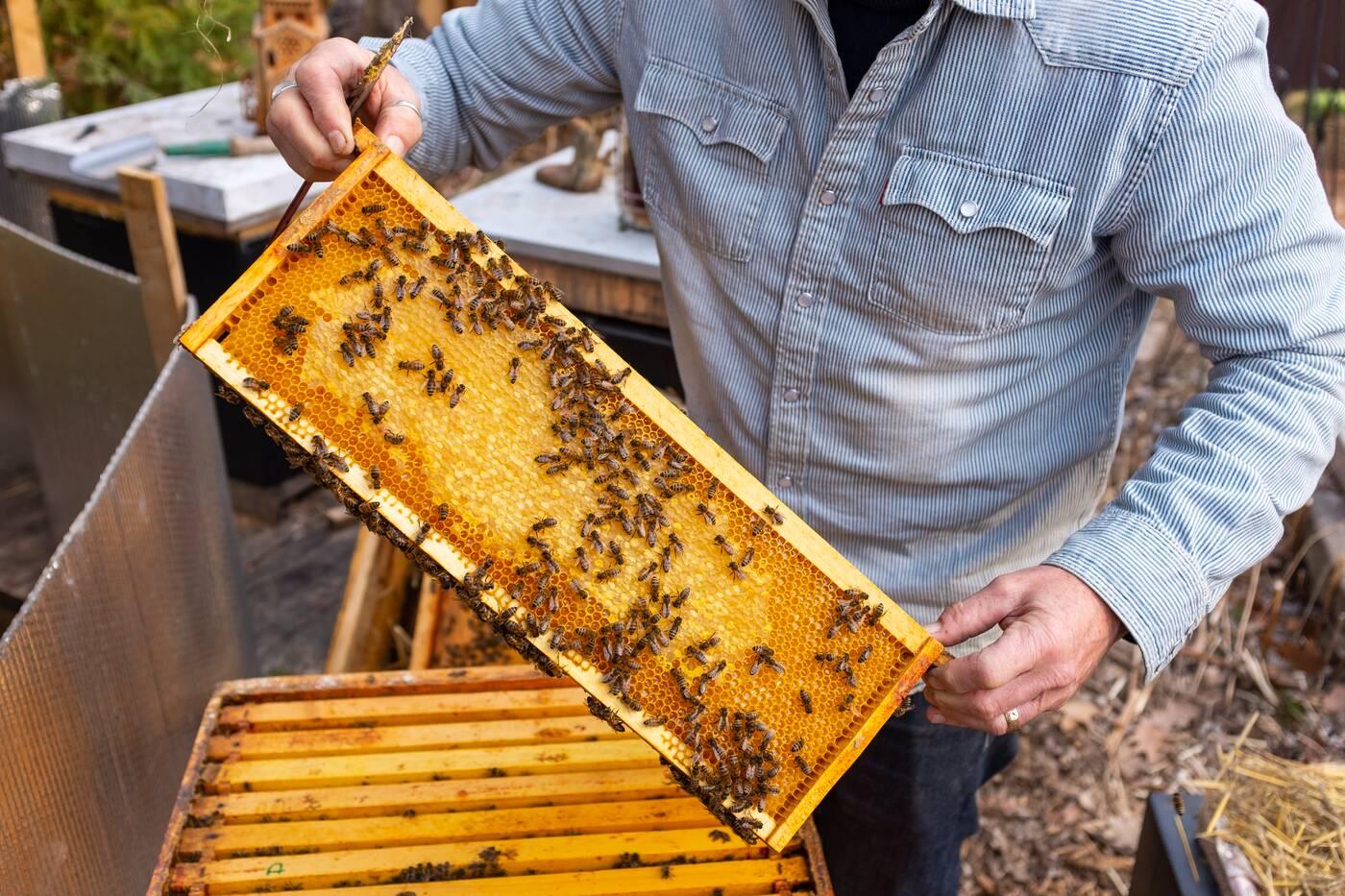 taylor creek honey
