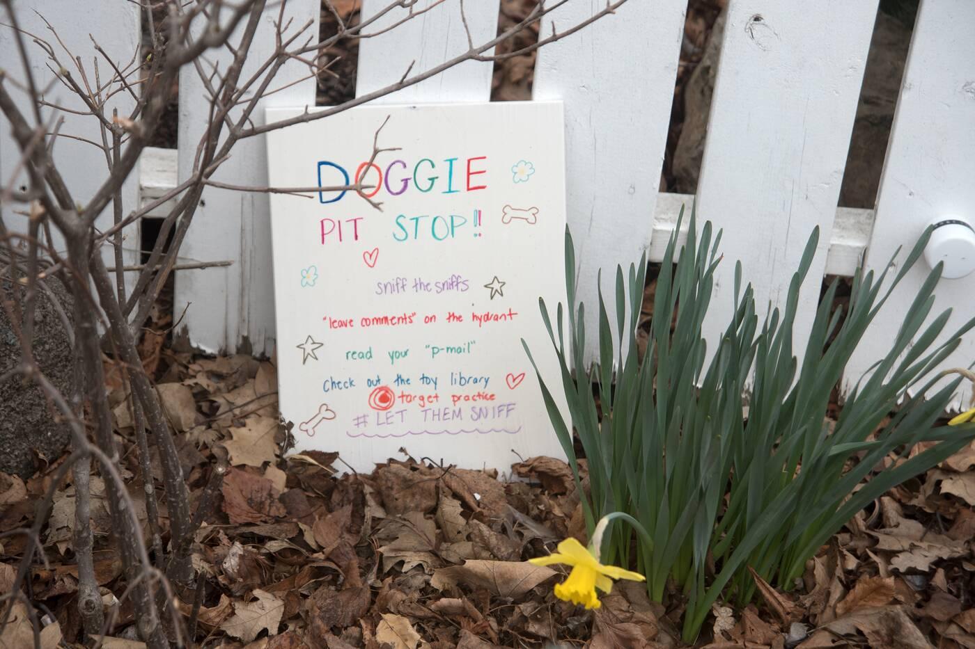 doggie pit stop