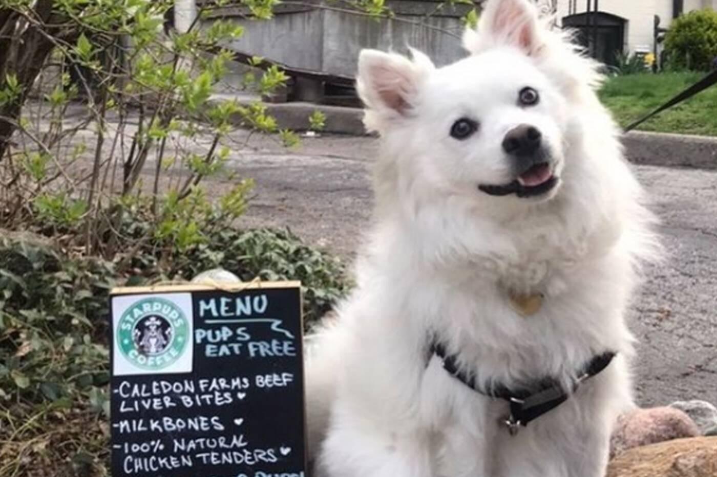 dog cafe toronto
