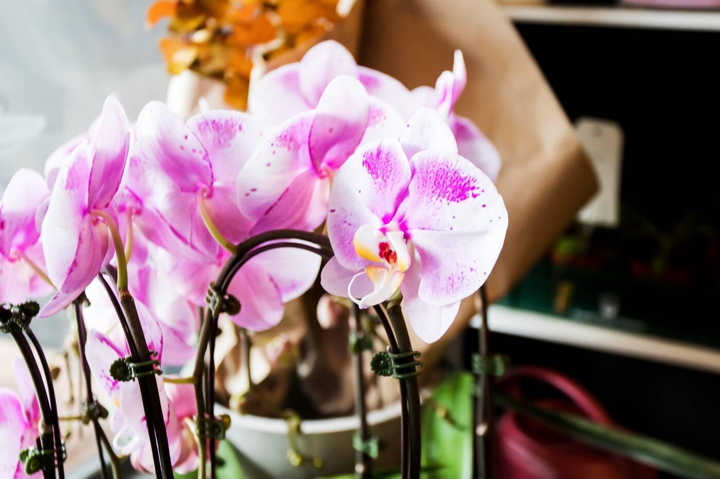 may flowers toronto