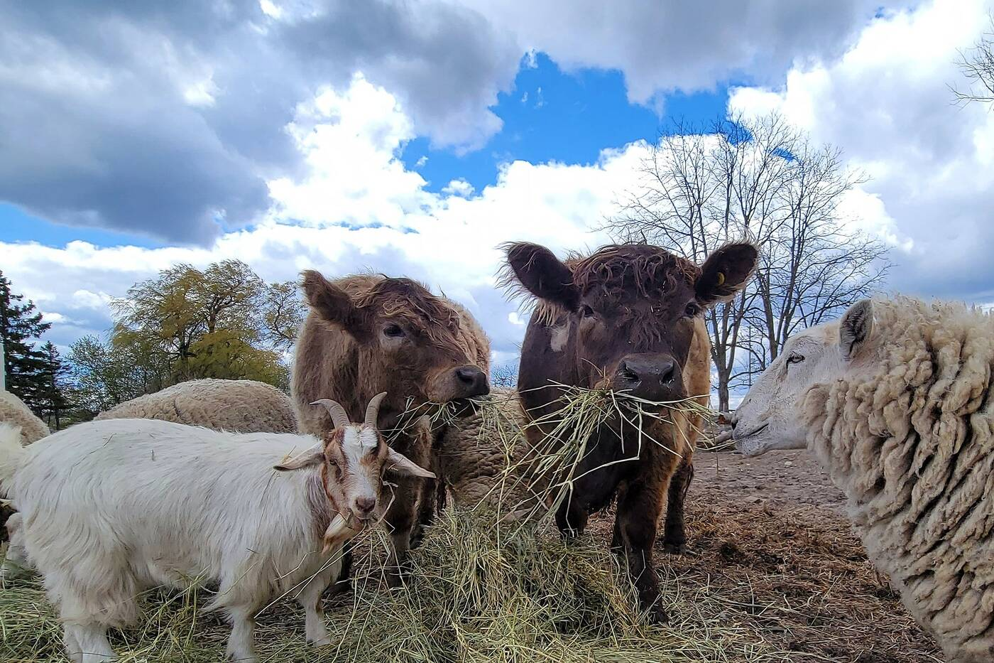 carma farms ontario