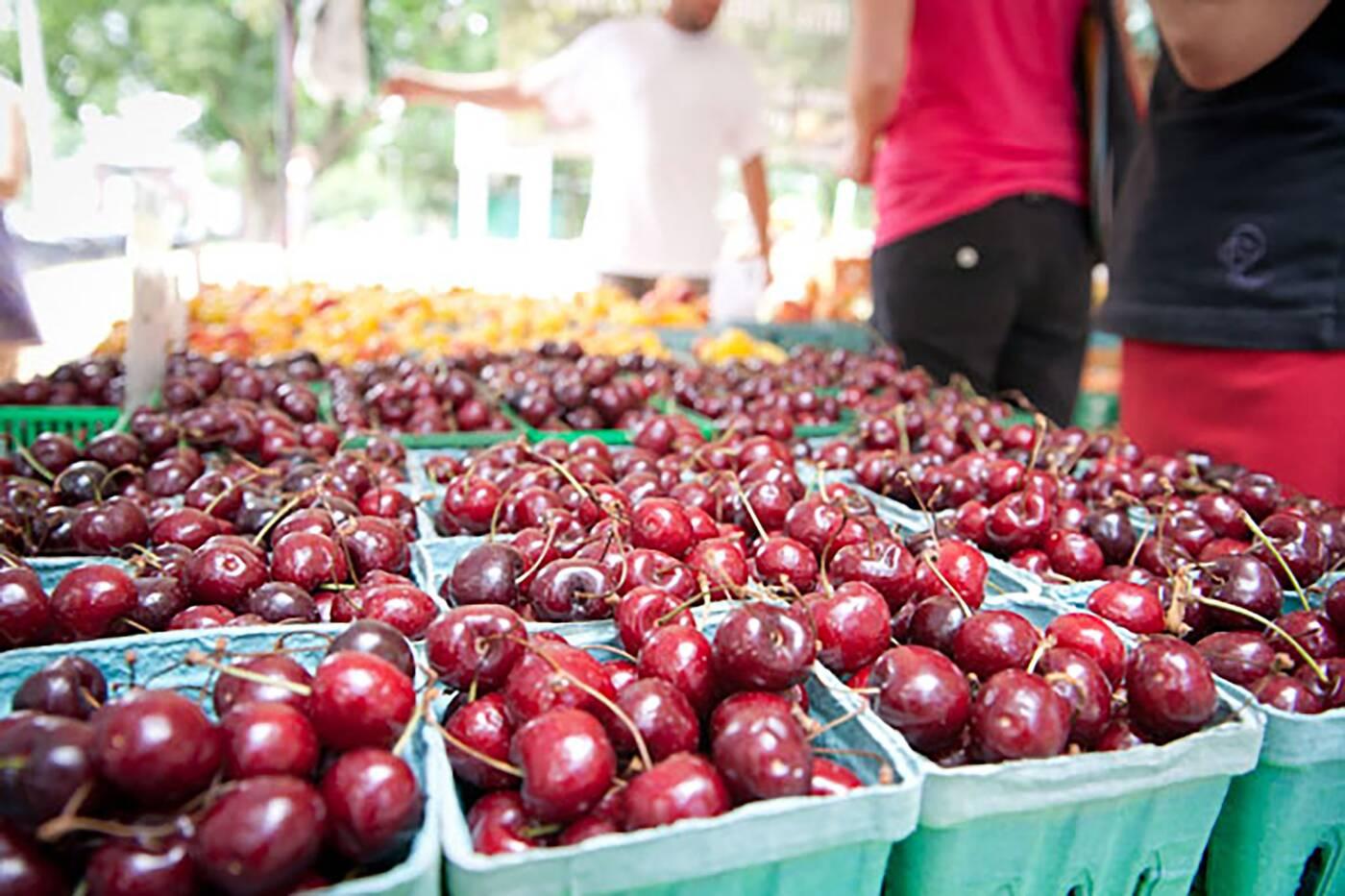 davisville farmers market