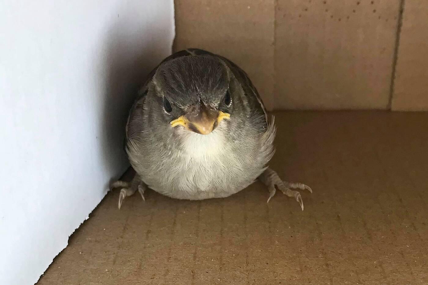 injured baby bird