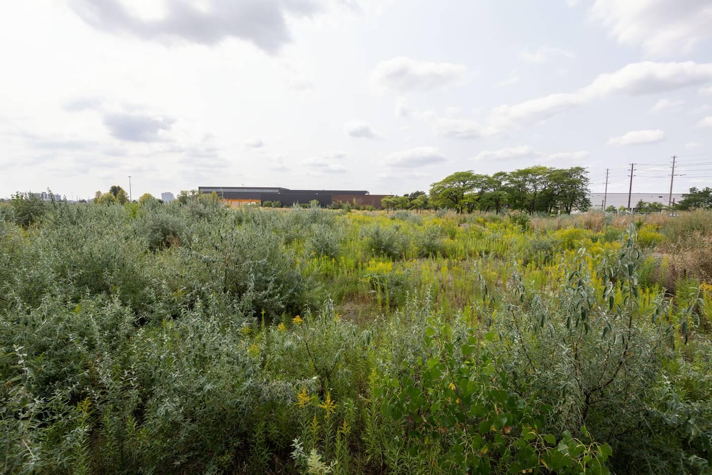 west detention centre toronto